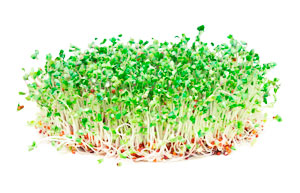 BrocSprouts1